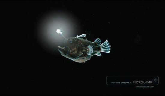 fish_10