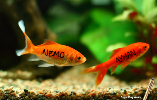 fish_30