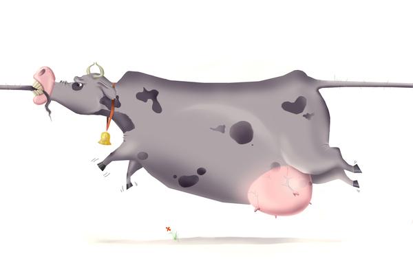 cow18