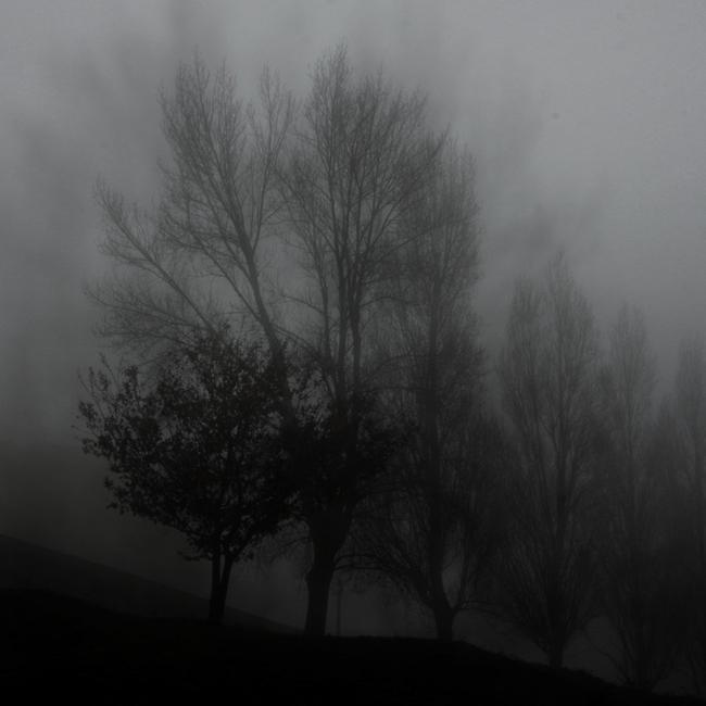 fog12