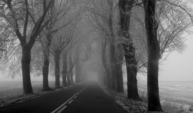 fog38
